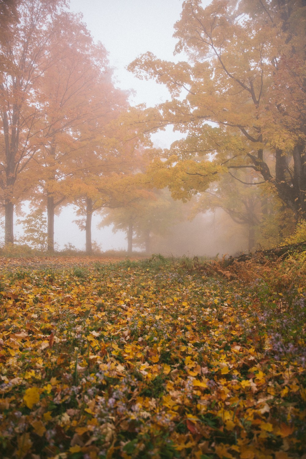 Misty walk in the fall foliage