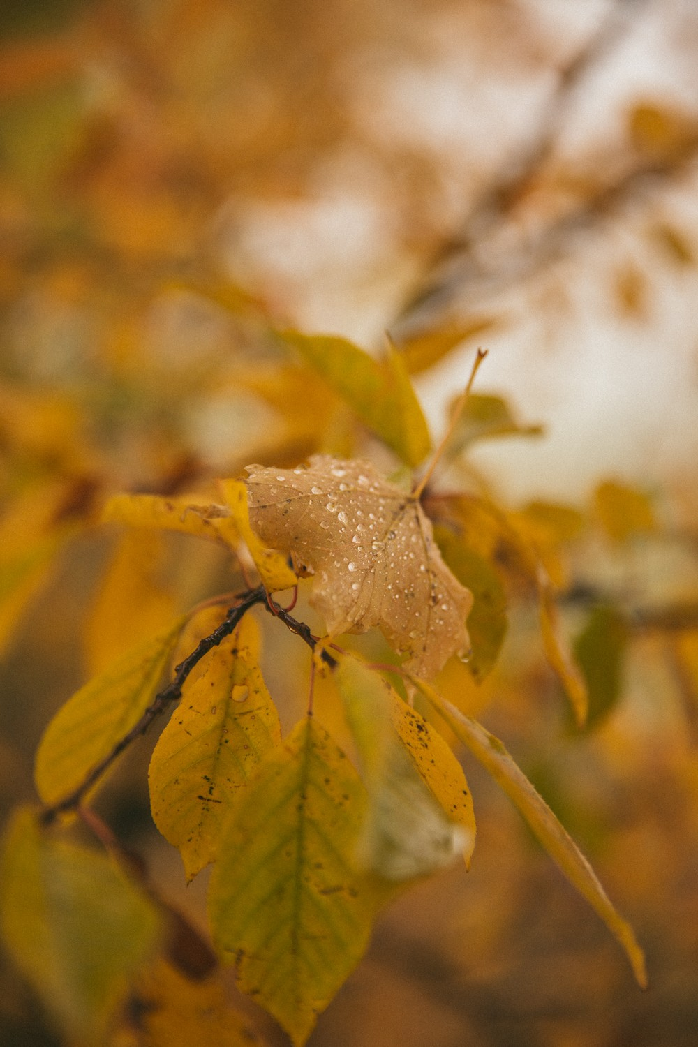 Autumn leaves sprinkled in dew