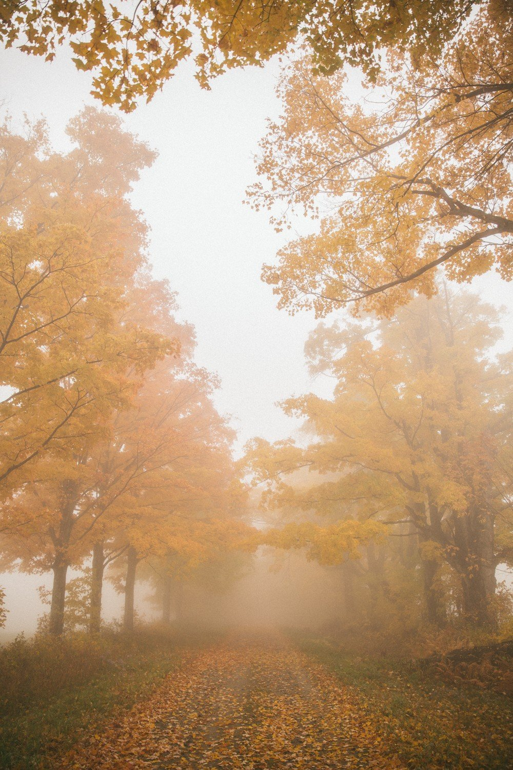 Autumn Fog in Vermont