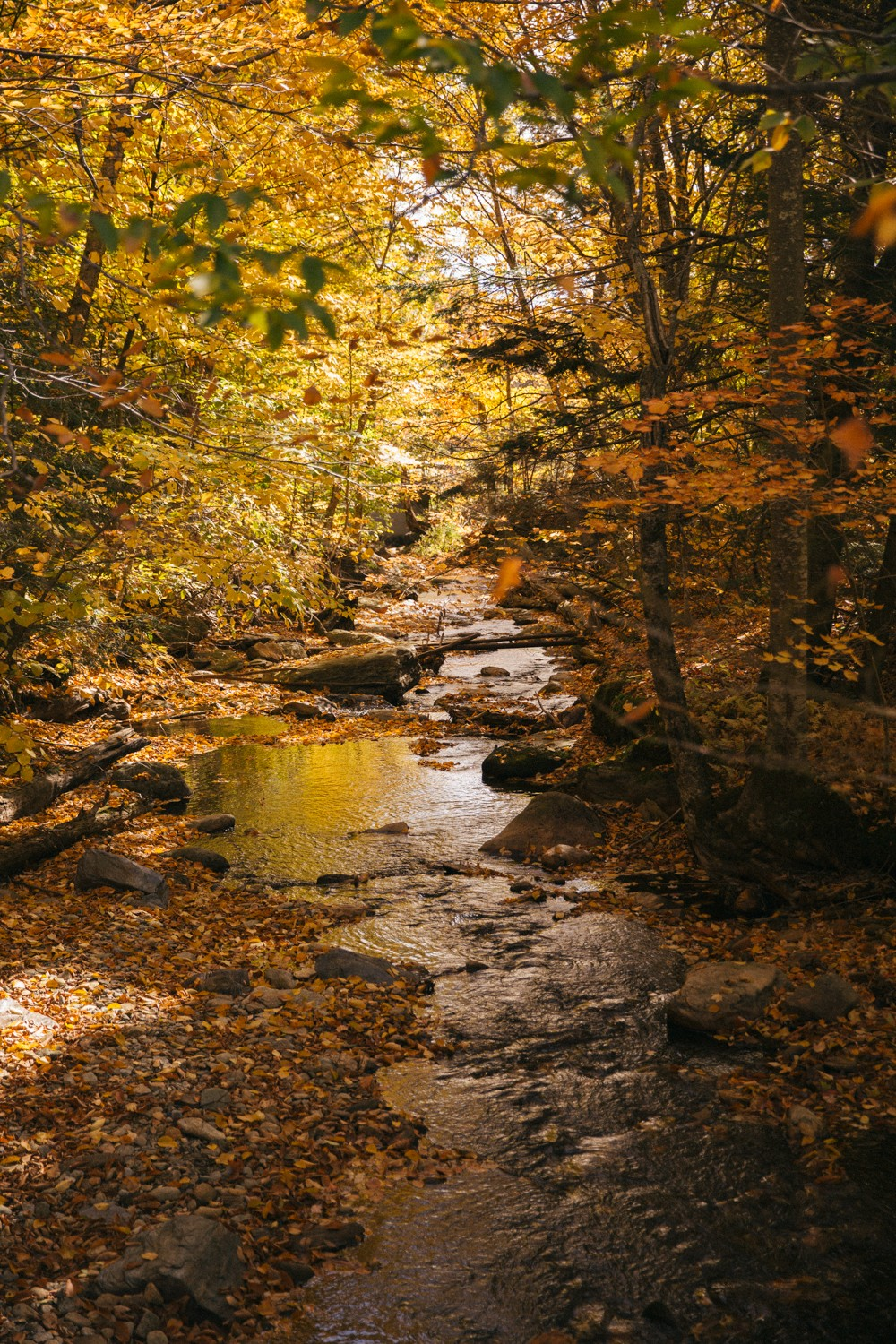 vermont-fall-11