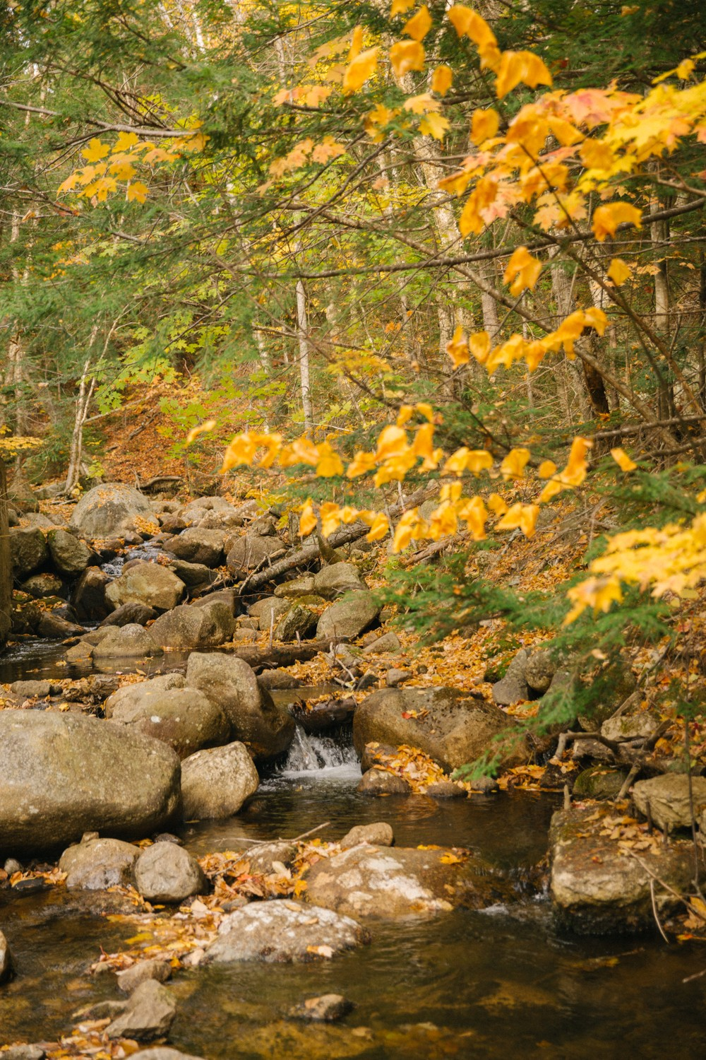 white-mountains-in-fall-17