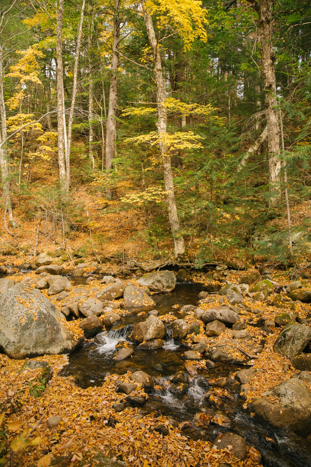 white-mountains-in-fall-19