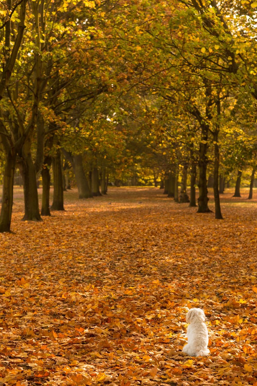 regents-park-london-14