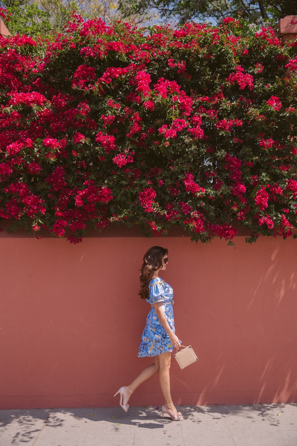 Spanish bougainvillea