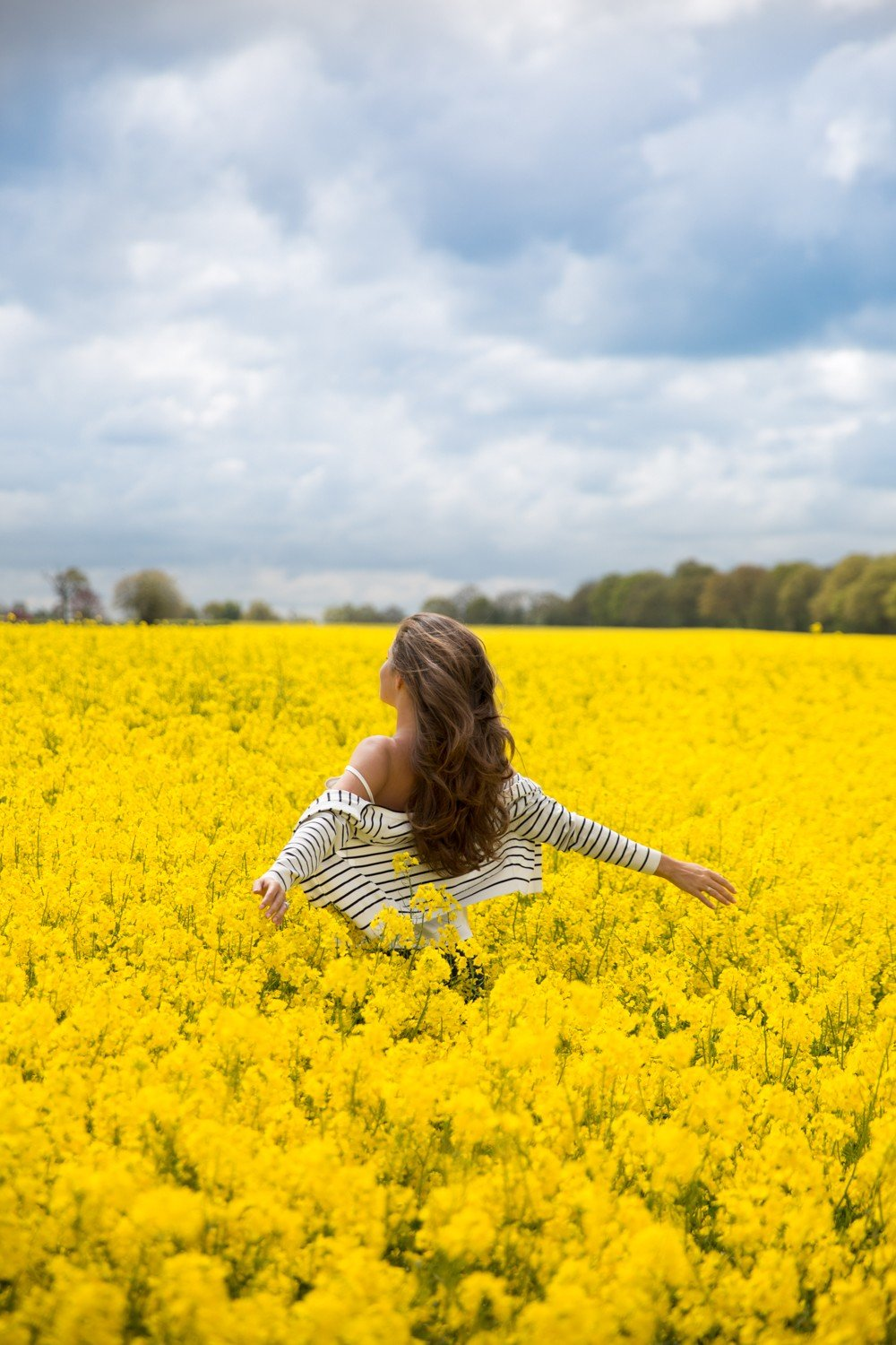 British rapeseed fields